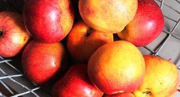 Podzimní a zimní recepty s jablky